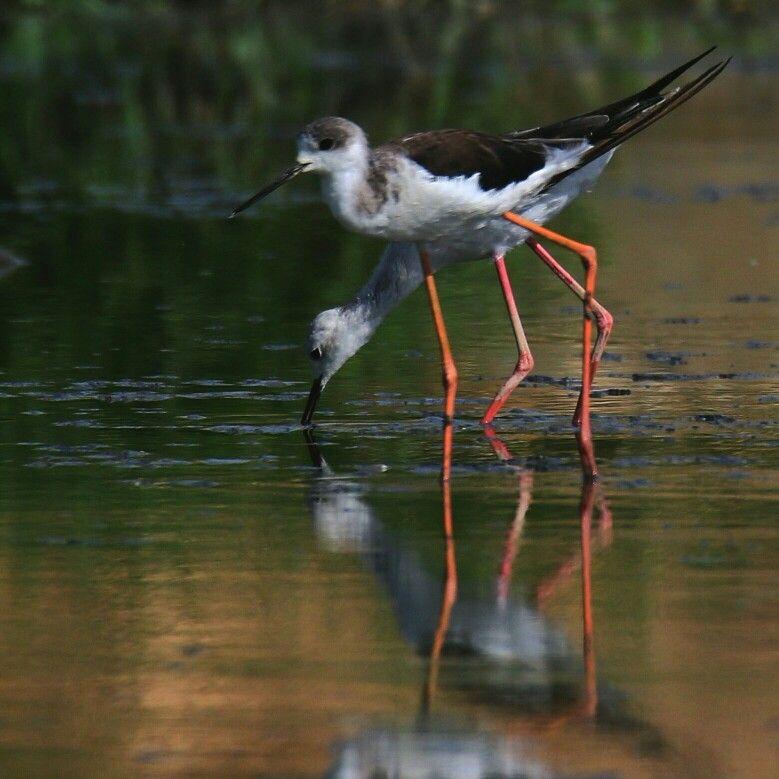 طائر ابو المغازل تصويري وادي حنيفة بالرياض Animals Birds Bird