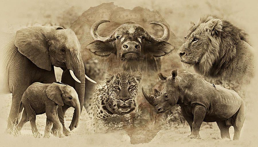Big Five Untamed Africa by Basie Van Zyl Africa