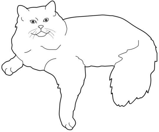 cat_55 Cats coloring pages for teens and adults