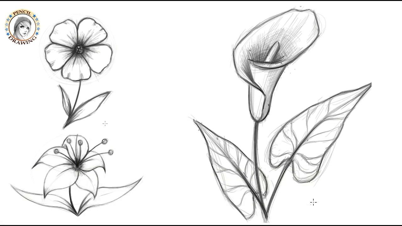 How To Draw Flowers كيف أرسم الزهور Flower Drawing Realistic Drawings Drawings