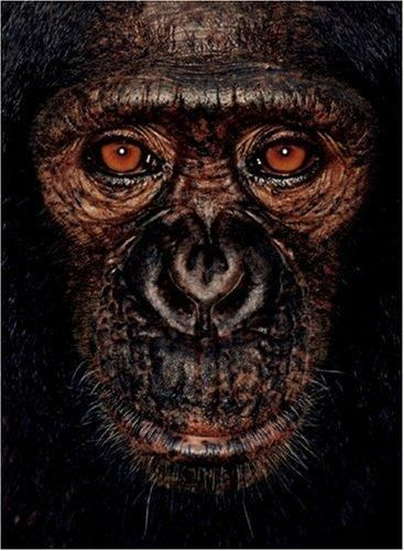 James & Other Apes; a book with 50 breathtaking close-up portraits of gorillas, chimpanzees, orangutans and bonobos and the story behind those apes.