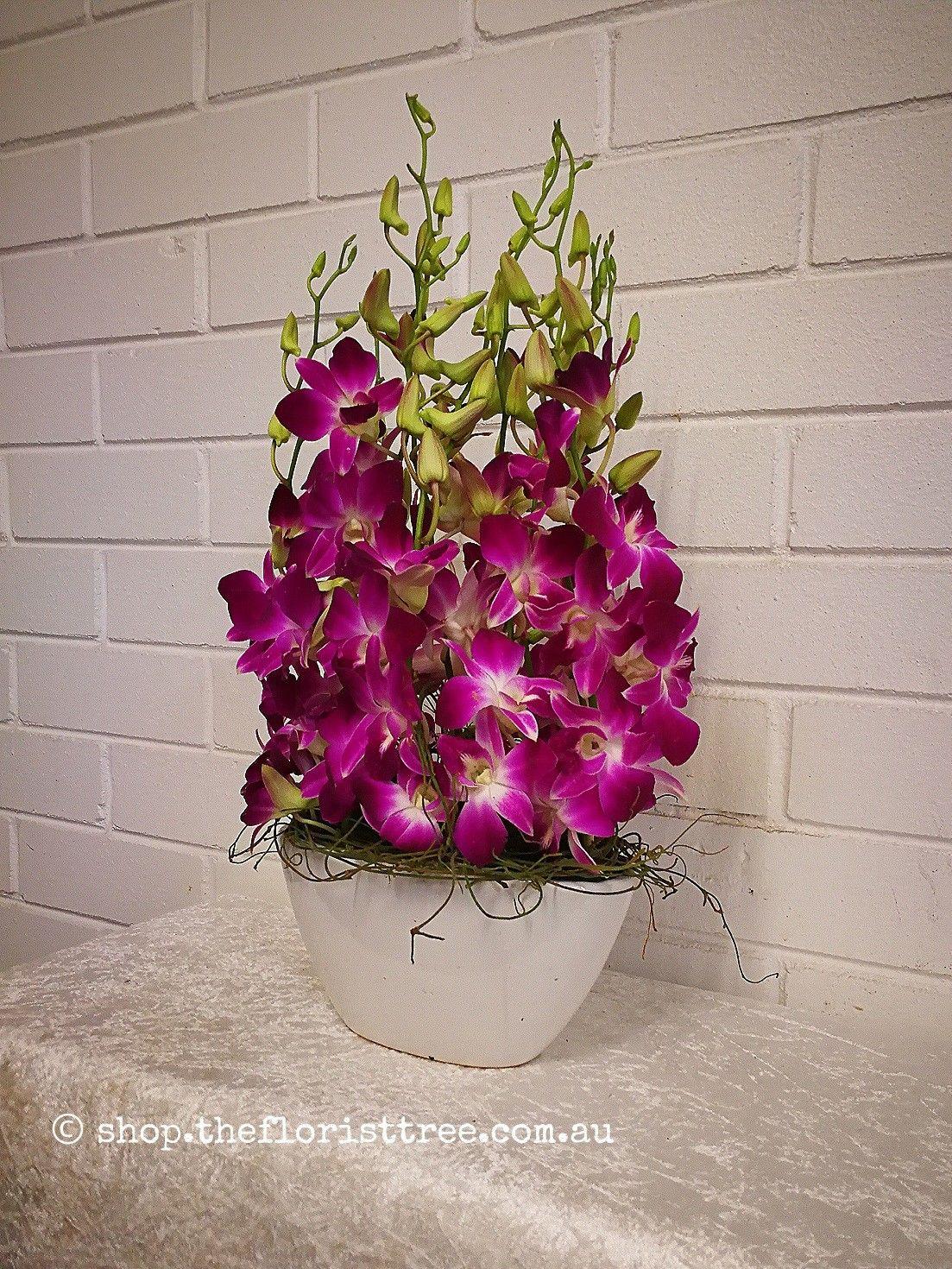 Singapore Orchid Boat Orchids Floral Plants