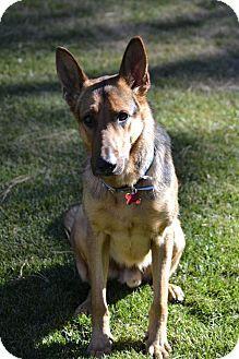 Pin By Sherry Daugherty Liberato On Dogs I Like Dogs Shepherd
