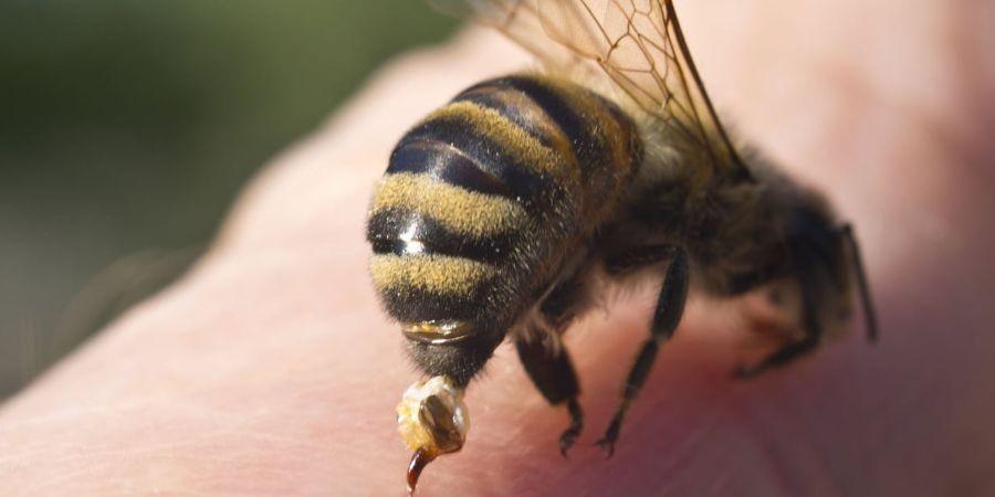 Des chercheurs australiens affirment avoir conçu un vaccin contre les piqûres …   – abeille urbain