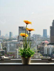 Die 10 beliebtesten Zimmerpflanzen - Ich will GRÜN für den Wohnraum!