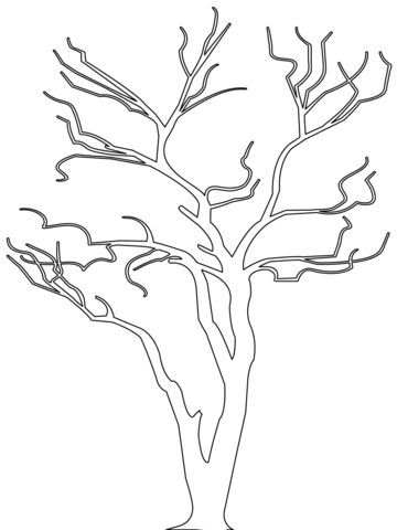 Autumn Fall Tree Without Leaves Coloring Page Tree Coloring Page Leaf Coloring Page Fall Leaves Coloring Pages