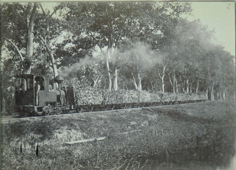 Transport per trein van suikerriet.  Datum: Locatie: Commewijne, Suriname Vervaardiger: toegeschreven aan Augusta Curiel Inv. Nr.:  73B-11 Fotoarchief Stichting Surinaams Museum