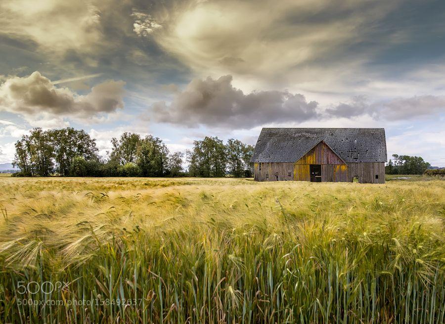 The Wheat Field by lucas01 via http//ift.tt/1Ypl2XN Old
