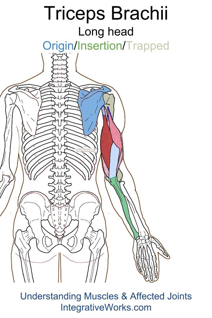 Trigger Points – Vague pain in the back of the shoulder and arm