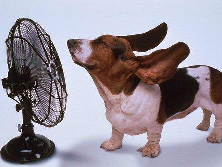 Un perrito con calor!