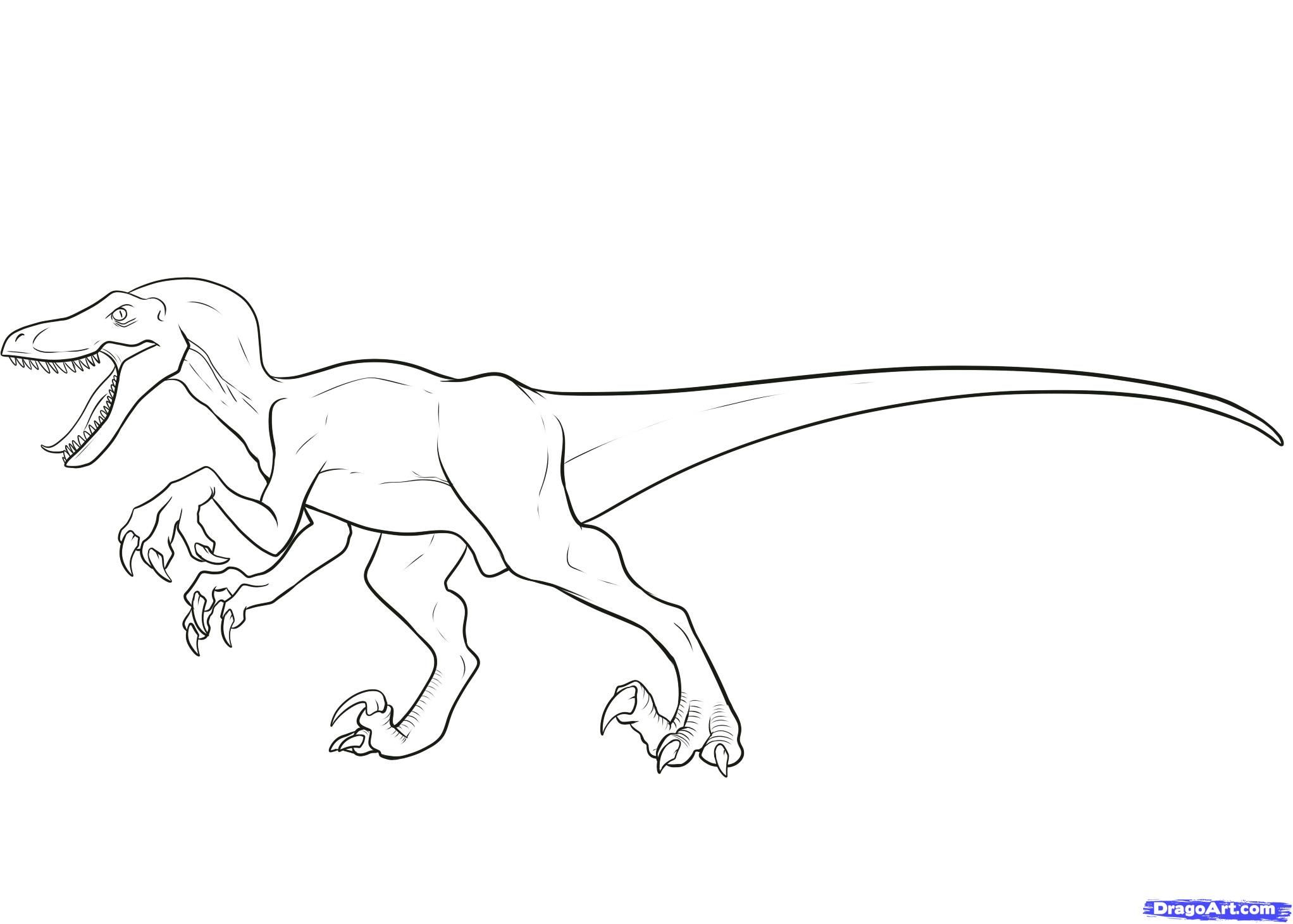 How To Draw A Velociraptor Velociraptor By Dawn Dinosaur