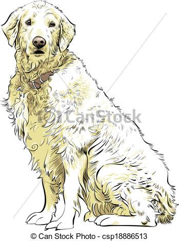 Vector Golden Retriever Stock Illustration Royalty Free
