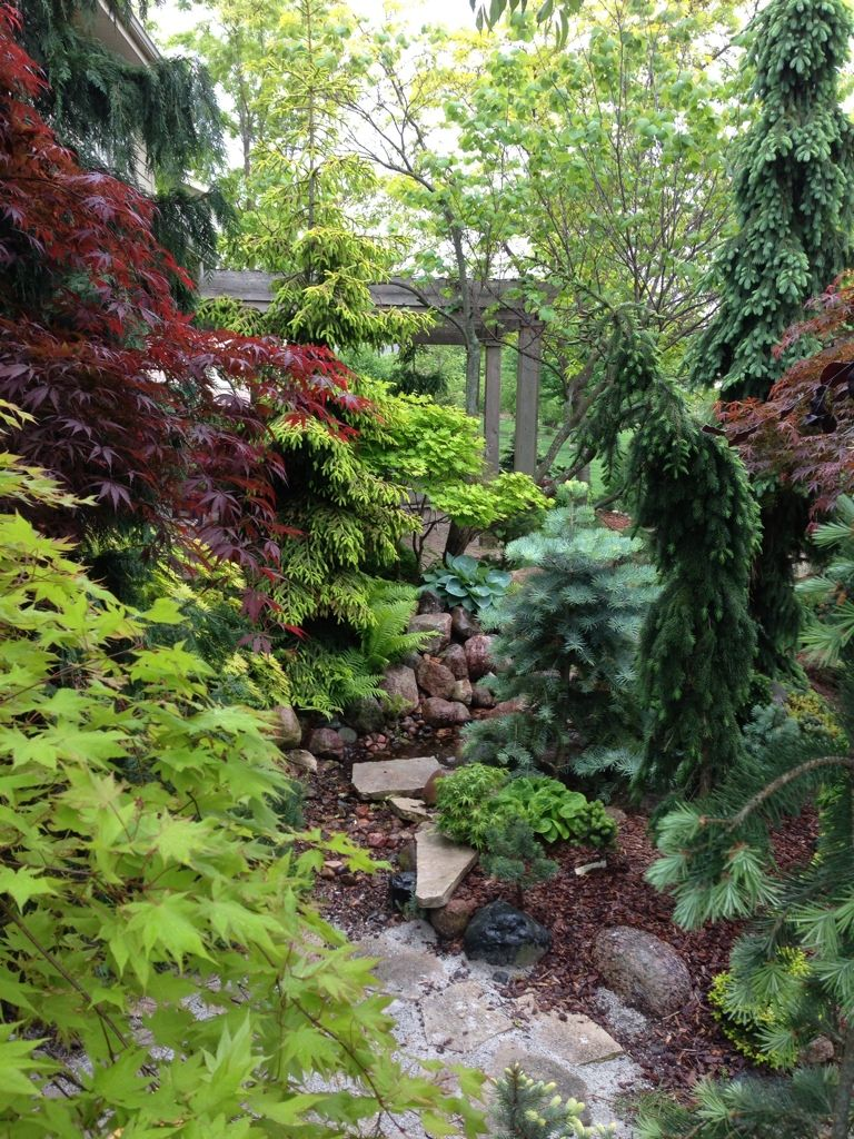 Japanese Maples and Conifers in the Garden | Conifers ...