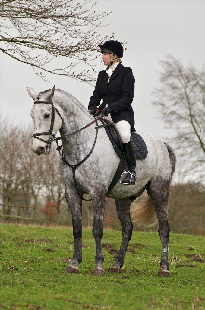 Foxhunting Dressage Equestrian Stock Horses Wild Horses