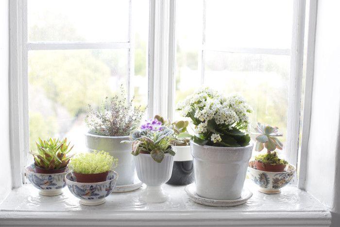 Fensterbrett Ideen: Plant Space #fensterbrett #ideen #plant #space