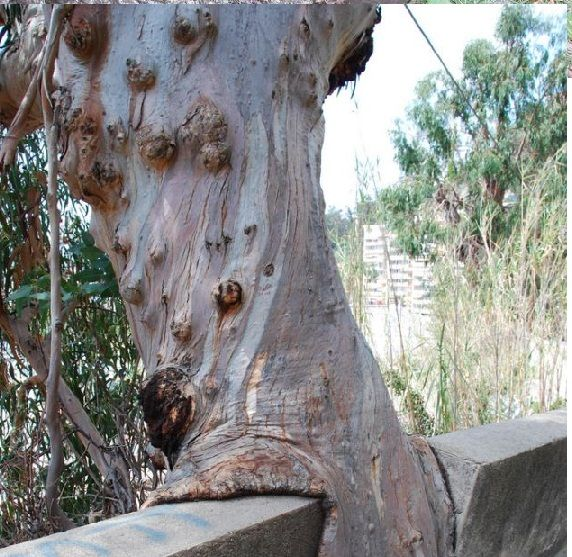 Image Detail For Hungry Trees Eating