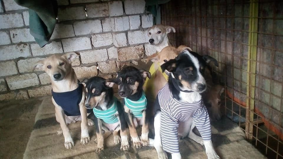 Hoda Mklad Is A Rescuer In Egypt It S Not An Easy Place For Dogs And She Is Hoping To Have A Little Bit Of Help In 2020 Animals Care Dogs Egypt