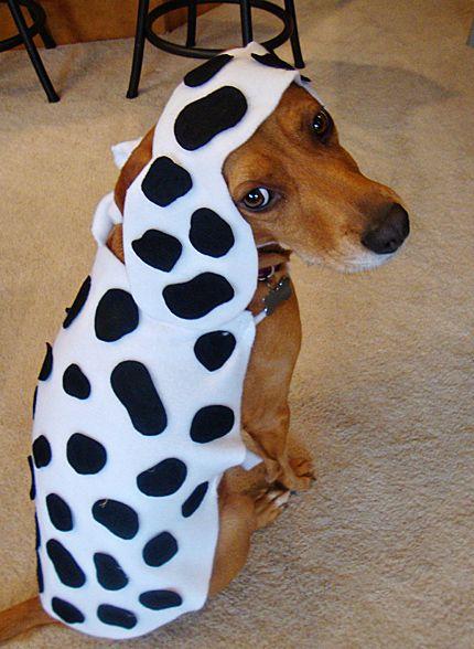 Diy Dog Halloween Costumes Halloween1 Diy Dog Costumes Diy