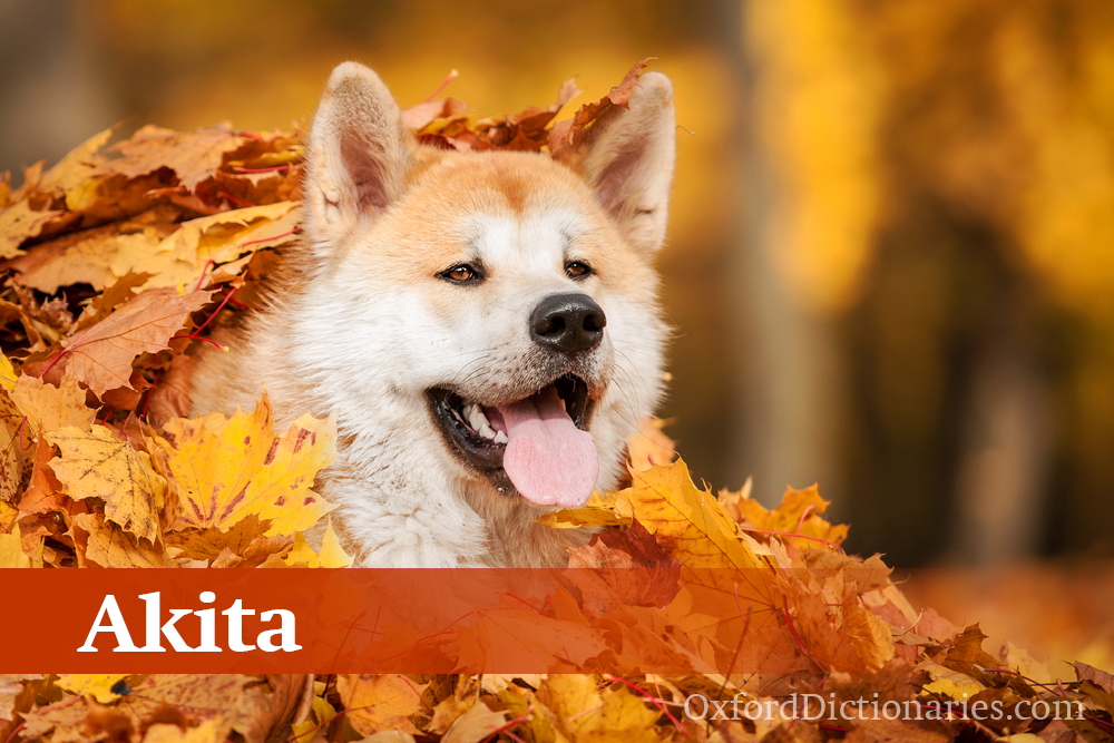 Akita This Japanese breed is named for the prefecture in