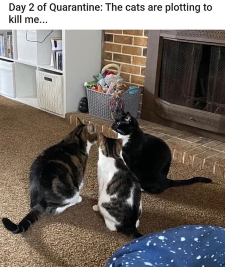 Recapping 2020 With The 50 Best Cat Memes In 2021 Best Cat Memes Cute Cat Memes Funny Cat Memes