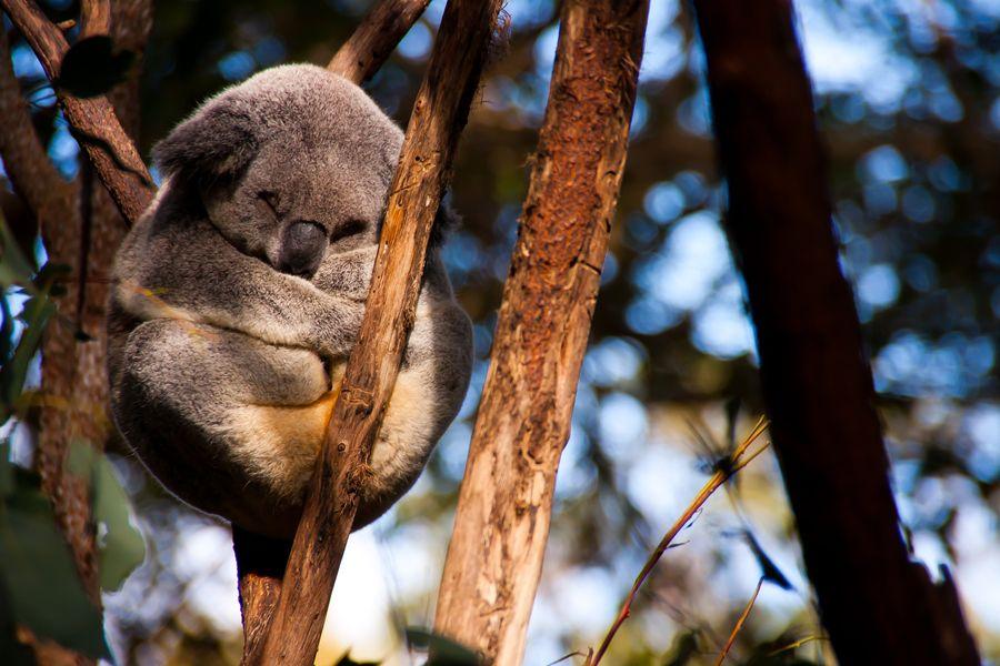 Wildlife Watching (Australia). 'Furry, cuddly, ferocious
