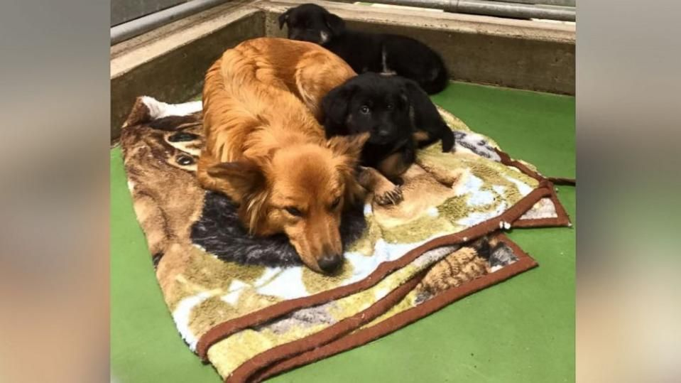 Dog Sneaks out of Kennel at Night to Comfort Crying Foster