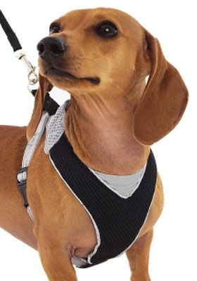 The Best Fitting Most Comfortable And Most Durable Small Dog