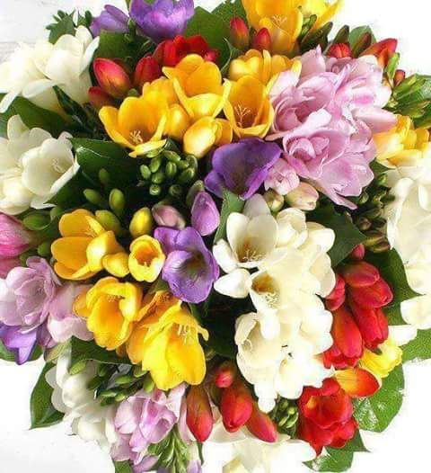 Pin By Szilvia Popol On So Pretty Freesia Bouquet Freesia Flowers Beautiful Flower Arrangements