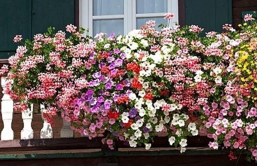 Rosliny Balkonowe Lubia Slonce Holiday Decor Floral Wreath Plants