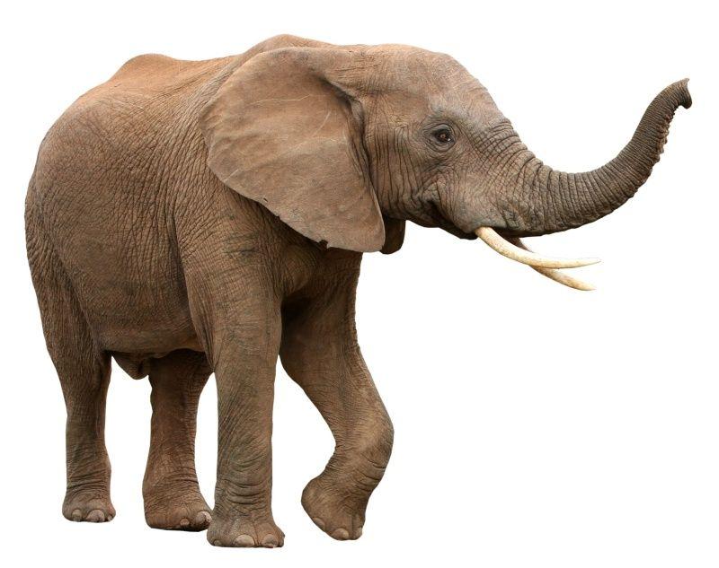 Done Help Elephants I Found A Stray Elephant Inside The