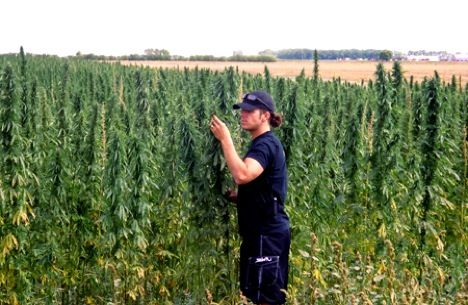 Hemp is a great source of complete proteins for vegetarians and non-vegetarians, as well as offers Omega-6 and Omega-3 fatty acids. Its grown with no pesticides and can be used for clothing, soaps, food, rope, shoes, wallets, you name it.