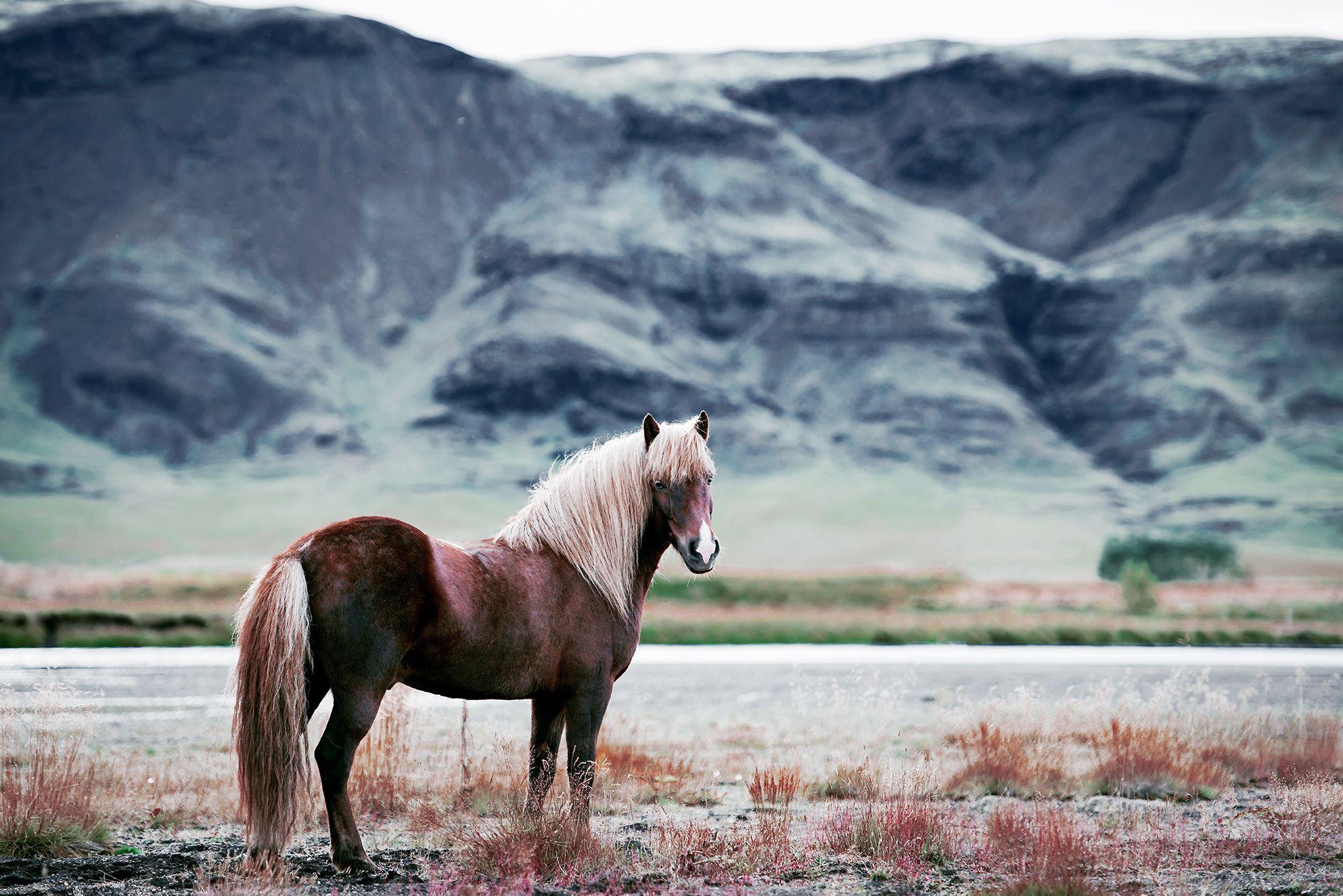 Fotos Pferde In Der Natur I Pferde Hubsche Pferde Pferde Fotografie