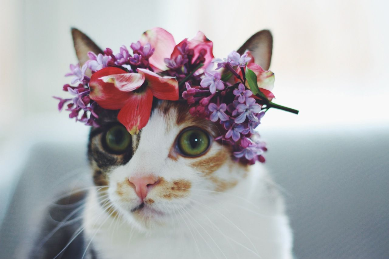 Kitty hat with flower crown