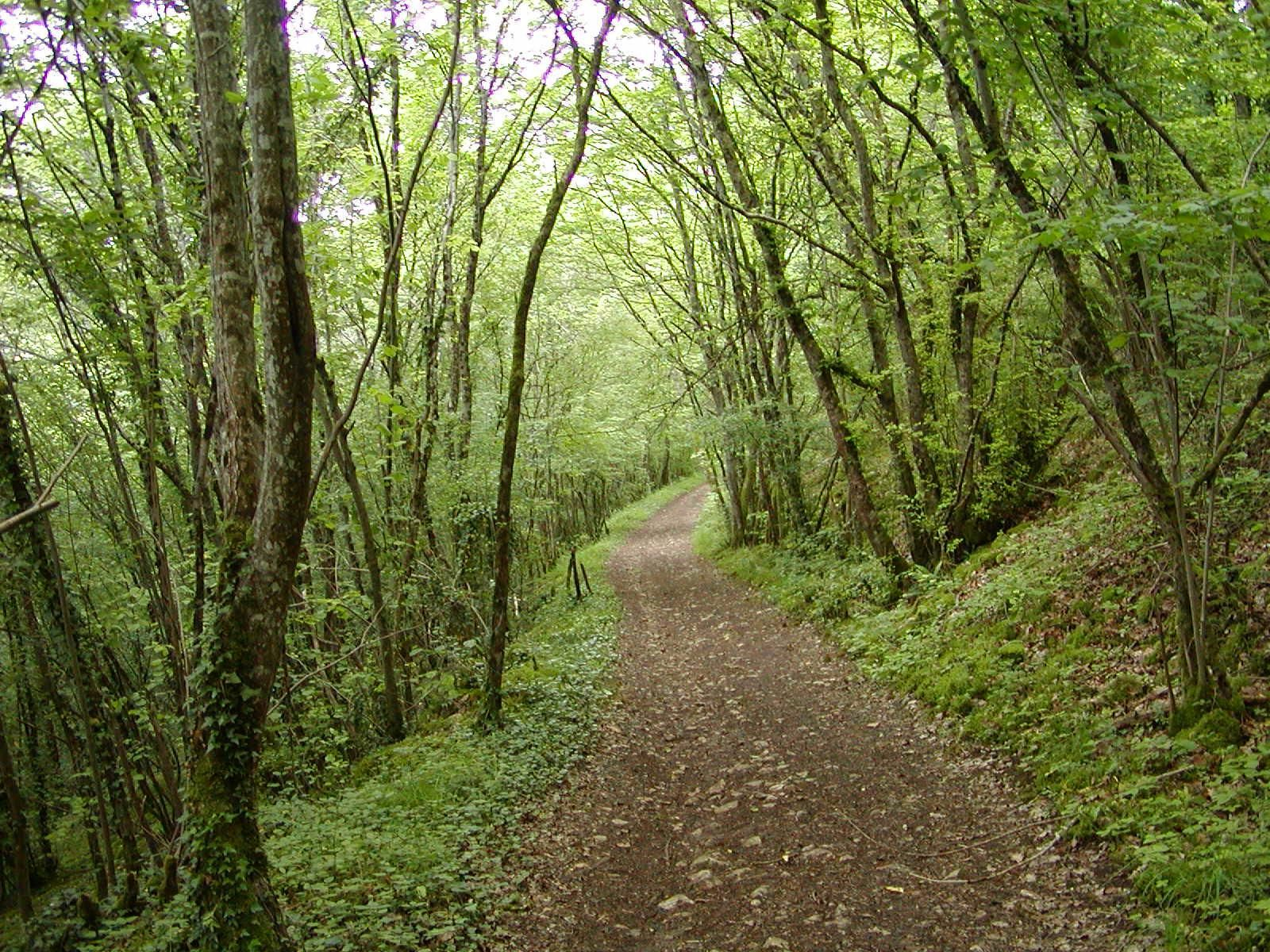 Winding Through The Beautiful French Forest Is The Agrippa Roman Road  Leading North From Camp Cora