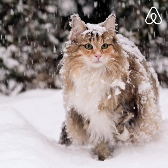 Pin by Reiya Munakata on Cats Norwegian forest cat, Cat