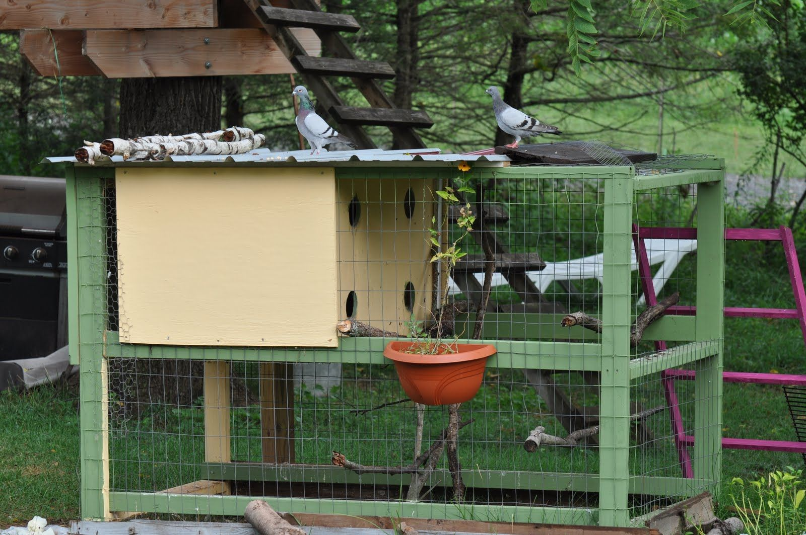 Pix For > How To Make A Pigeon House | A Pigeon Place | Pinterest