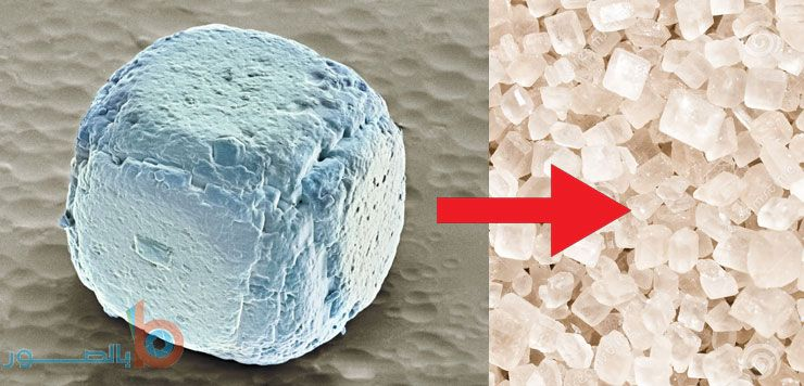 صورة حبيبات الملح الكريستالية تحت المجهر