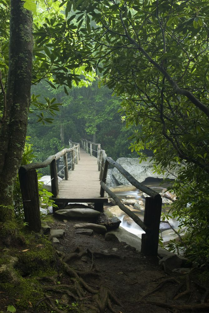 Popular Hiking Trail In The Great Smoky Mountains Reopens