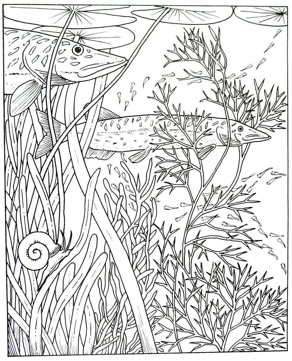 Northern Pike Animal Coloring Book Page Printable