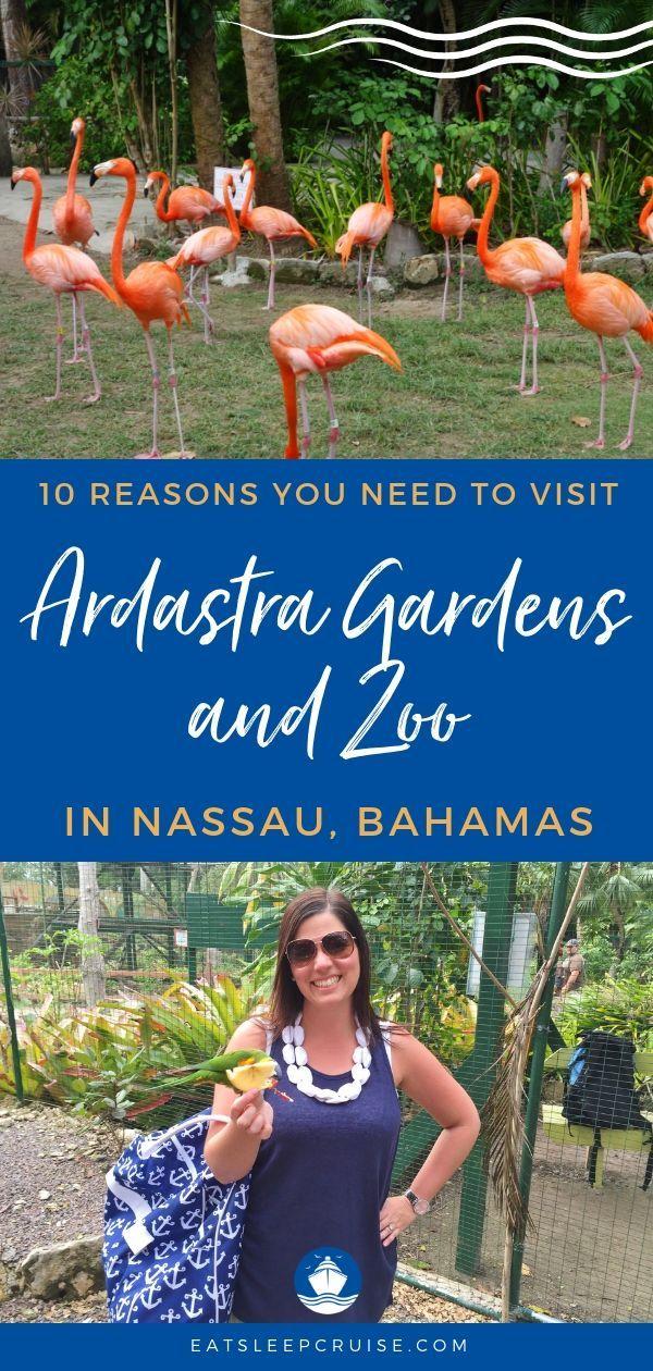 3f6f52f6458081e431bb9fa607c7b195 - Nassau Bahamas Ardastra Gardens And Zoo
