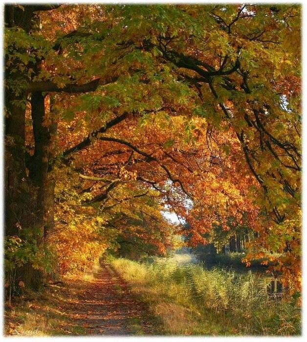 A Long Walk In The Beauty Of Fall The Art Of Being