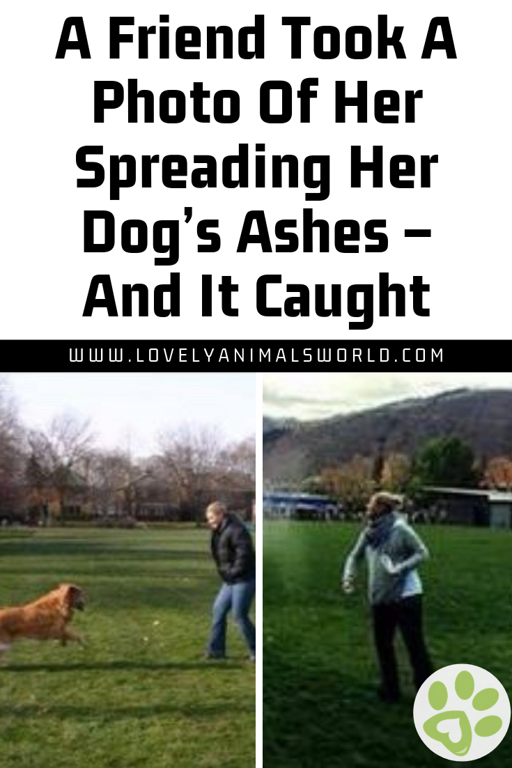 A Friend Took A Photo Of Her Spreading Her Dog S Ashes And It