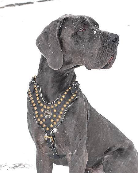 Pin By Rhonda A On Doggie Stuff Dane Dog Dog Harness Great