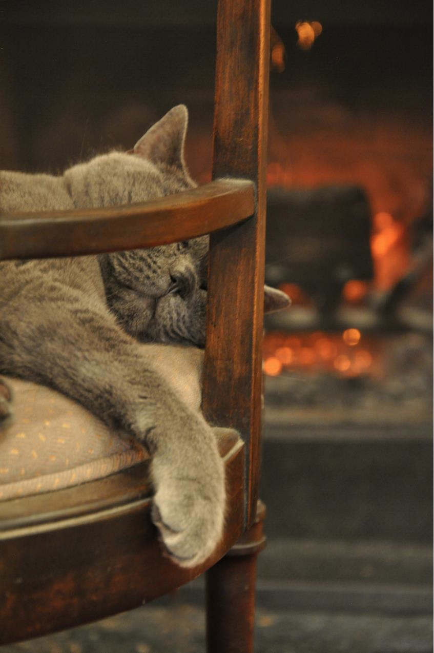 Phineas hogging the fire.