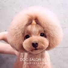 テディベアカット の画像検索結果 Pet Grooming Dog Grooming Dog Haircuts
