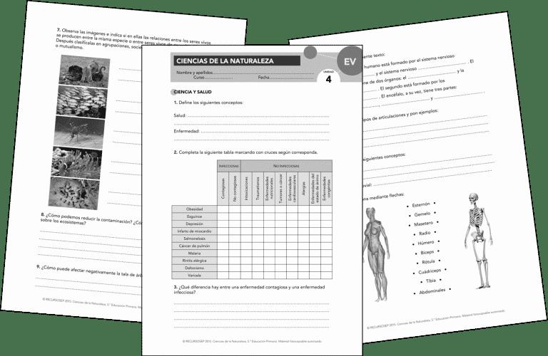 Evaluaciones Propuestas Aprender Es Crecer Anaya Ccnn5 Evaluacion Anaya Primaria Evaluaciones Para Preescolar