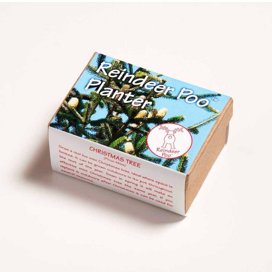 Grow Your Own Christmas Tree | Christmas reindeer, Tree, Tree seeds