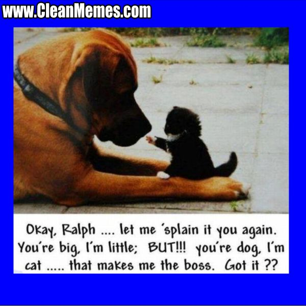 Funny Dog Meme Clean : Written by cleanmemes no comments posted in cat memes