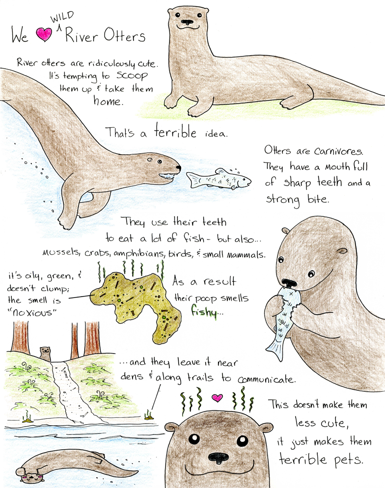 river otter diagram |     blog: science!!! comics - episode seven: we heart  wild river otters