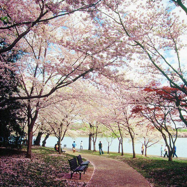 West Potomac Park Washington Dc Lindas Paisagens Wallpaper Paisagem Lugares Maravilhosos